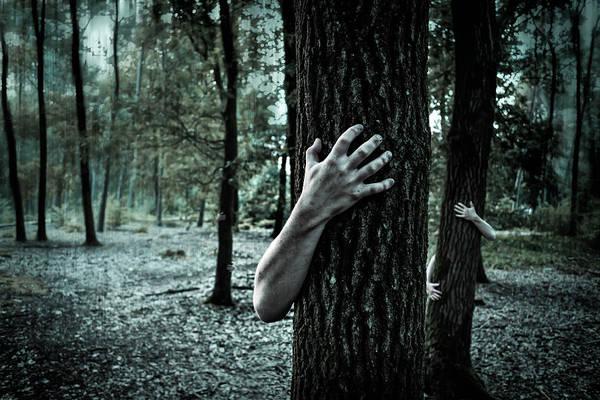 Haunts Photograph - Haunted Forest  by Britten Adams