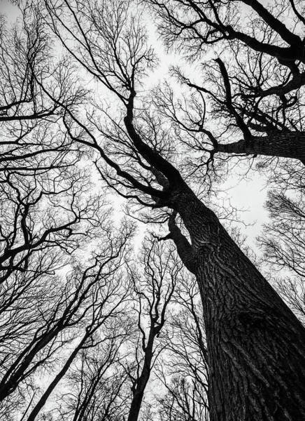 Wall Art - Photograph - Haunted Woods by Martin Newman
