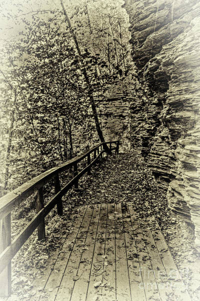 Photograph - Havana Pathway In Sepia by William Norton