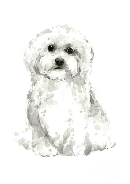 Wall Art - Painting - Maltese, Havanese Custom Dog Illustration, White Dog Art Print, Maltese Watercolor Painting by Joanna Szmerdt