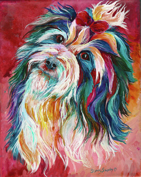 Painting - Havanese by Sherry Shipley