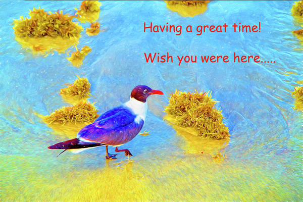Photograph - Having A Great Time Seagull by Kay Brewer