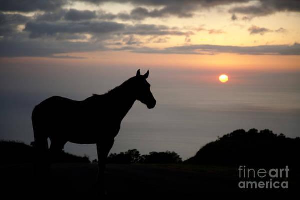 Wall Art - Photograph - Horse At North Kohala Ranch by Peter French