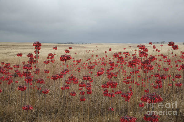 Photograph - Hawaii Landscape With Red Flowers by Charmian Vistaunet