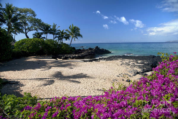 Wall Art - Photograph - Hawaii, Maui, Makena, Bougainvillea by Peter French