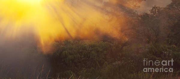Photograph - Hawaii Steam Vents And Foliage by Charmian Vistaunet