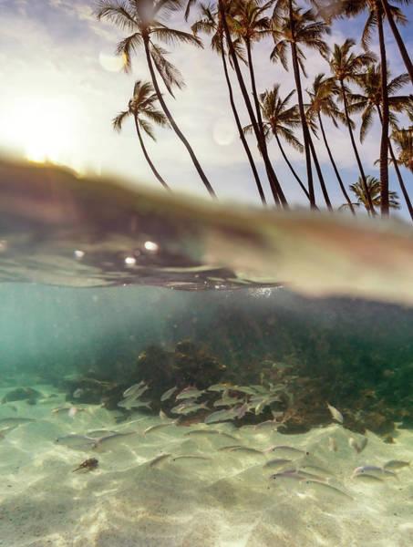 Photograph - Hawaii Underwater Split by Christopher Johnson
