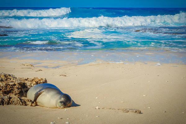 Kaena Photograph - Hawaiian Monk Seal by Megan Martens