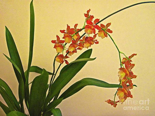 Hawaiian Orchid Spray Art Print