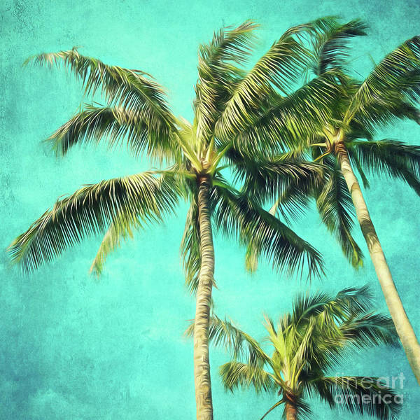 Wall Art - Photograph - Hawaiian Palms by Sylvia Cook