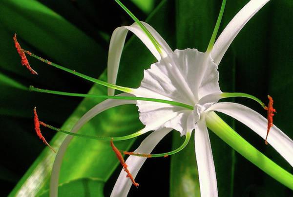 James Temple Photograph - A Delicate Flower by James Temple