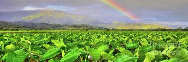 Hawaiiana Photograph - Hawaiian Taro Fields by DJ Florek
