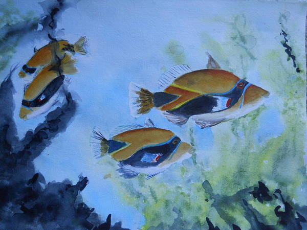 Painting - Hawaiian Trigger Fish by Audrey Bunchkowski