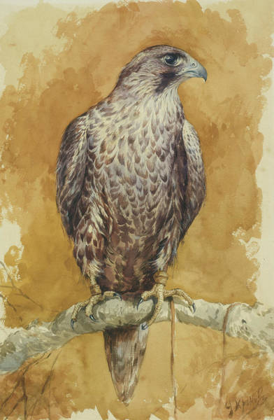 Wall Art - Painting - Hawk by Alexander Sergeevich Khrenov