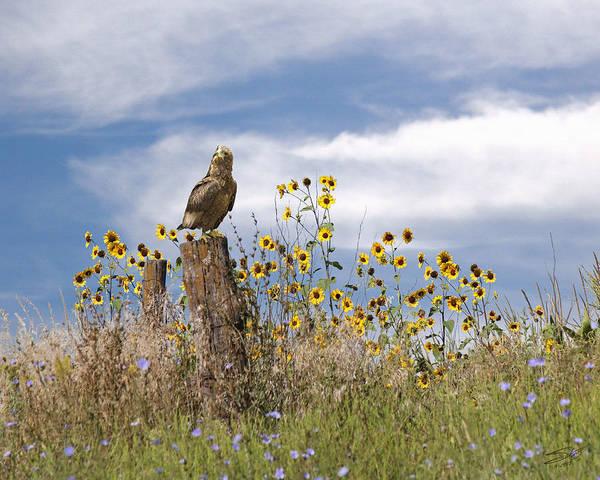 Fence Post Digital Art - Hawk In Field Of Wildflowers by M Spadecaller