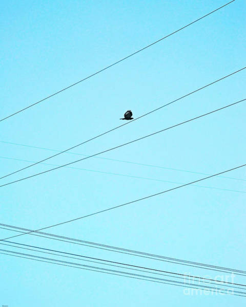 Photograph - Hawk In The Obstacle Course by Lizi Beard-Ward