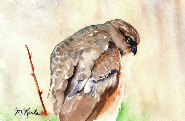 Painting - Hawk by Marsha Karle