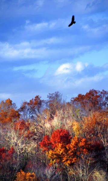 Photograph - Hawk Over Laurel by Sam Davis Johnson