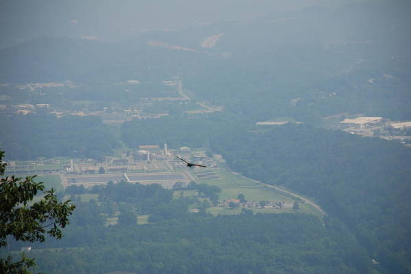 Photograph - Hawk Soars Point Park Chattanooga by Kenny Glover