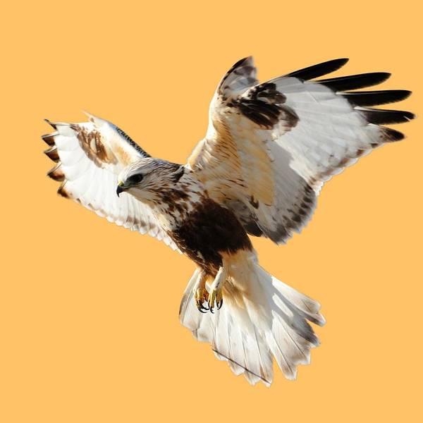 Photograph - Hawk T-shirt by Greg Norrell