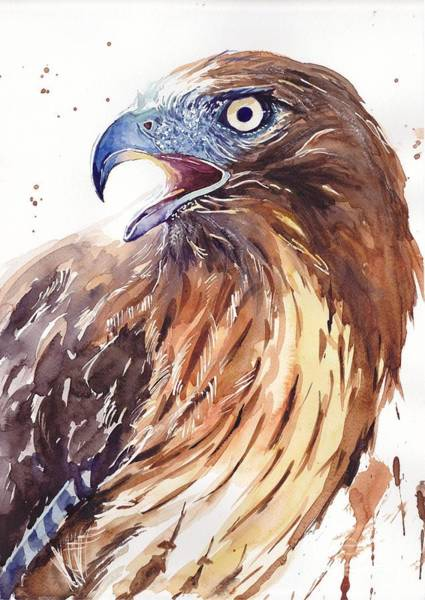 Blue Feather Wall Art - Painting - Hawk Watercolor by Suzann's Art