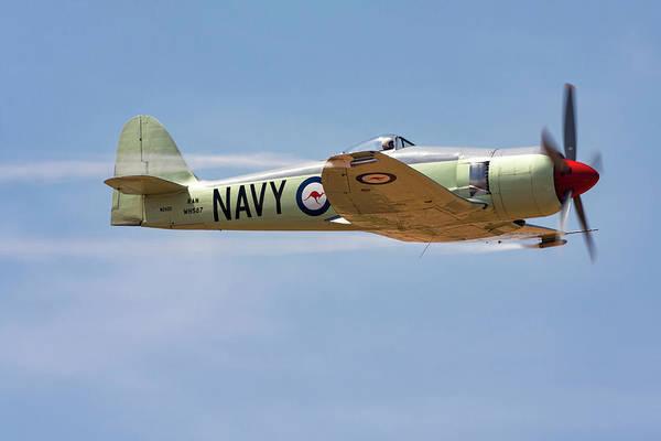 Hawker Sea Fury Photograph - Hawker Sea Fury In Flight by Rick Pisio
