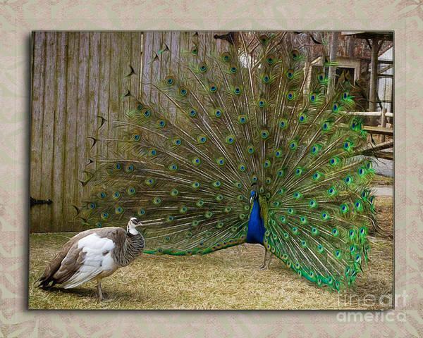 Pheasant Digital Art - Hay Baby by Terry Weaver