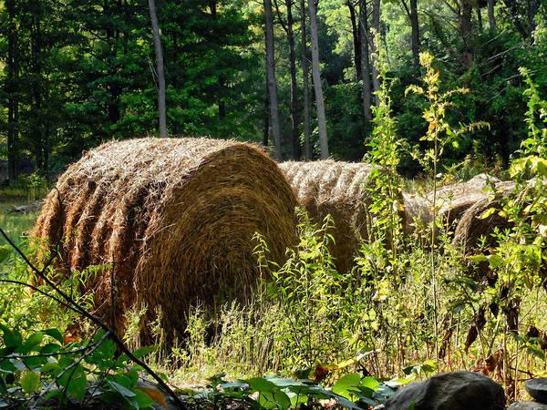 Barley Painting - Hay Bay Rolls by Jeelan Clark