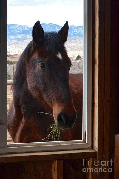 Photograph - Hay There by Cindy Schneider