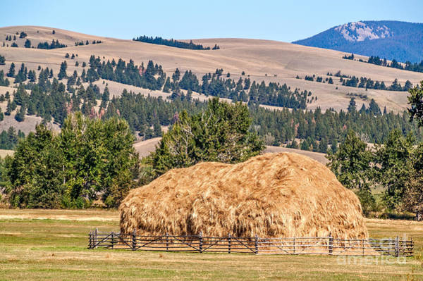 Photograph - Haystack Created With A Beaverslide by Sue Smith