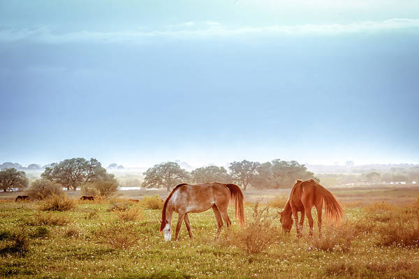 Photograph - Hazy Field For Dinner by Melinda Ledsome