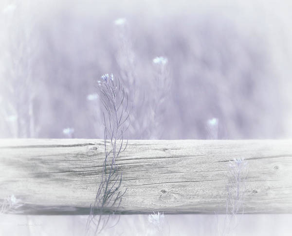 Wall Art - Photograph - Hazy Lavender Wildflowers by Jennie Marie Schell