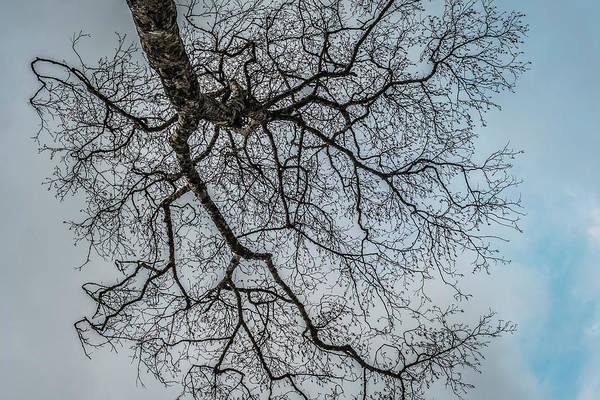Photograph - Hdr Alder by Robert Potts