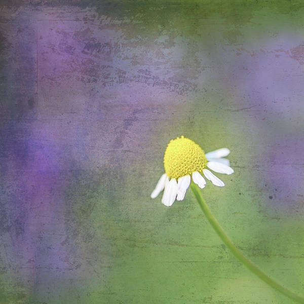 Photograph - He Loves Me by Jennifer Grossnickle