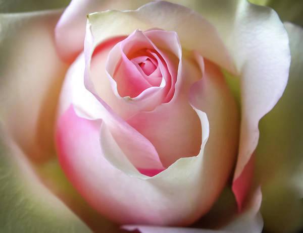 Wedding Bouquet Photograph - He Loves Me Still by Karen Wiles