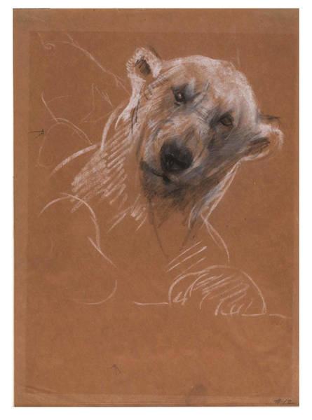 Polar Bear Drawing - Head Of A Polar Bear by John Macallan Swan