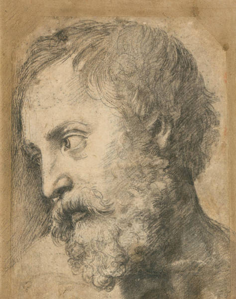 Drawing - Head Of An Apostle In The Transfiguration by Raphael