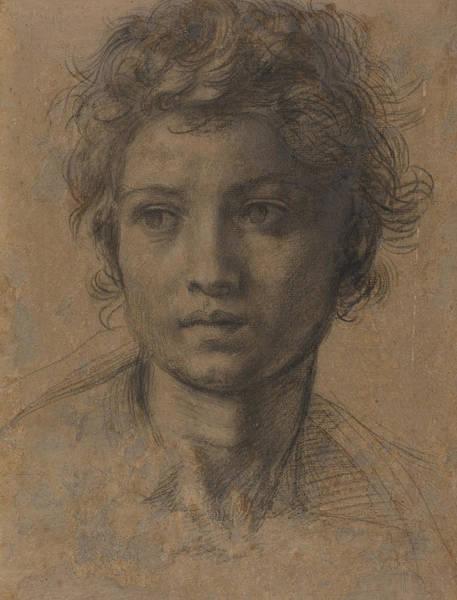 Wall Art - Drawing - Head Of Saint John The Baptist by Andrea Del Sarto