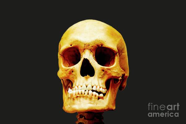 Photograph - Head Skeleton by Mats Silvan
