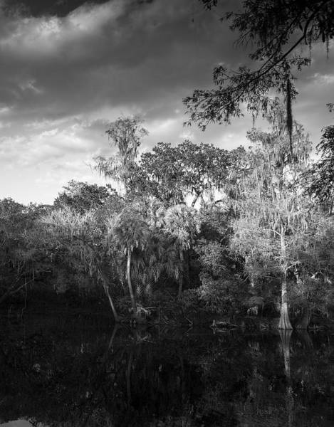 Cypress Knees Photograph - Head Waters by Marvin Spates