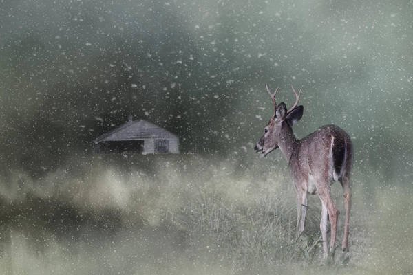 Photograph - Heading Home In The First Snow by Jai Johnson