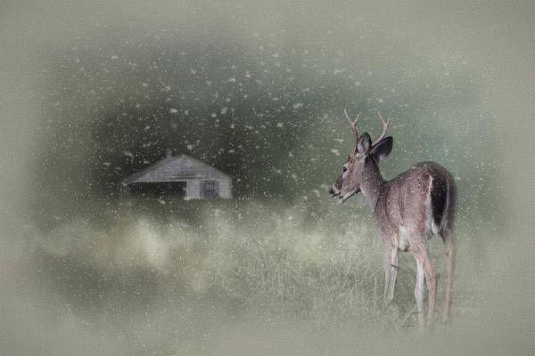 Photograph - Heading Home In The First Snow - With Canvas Vignette by Jai Johnson