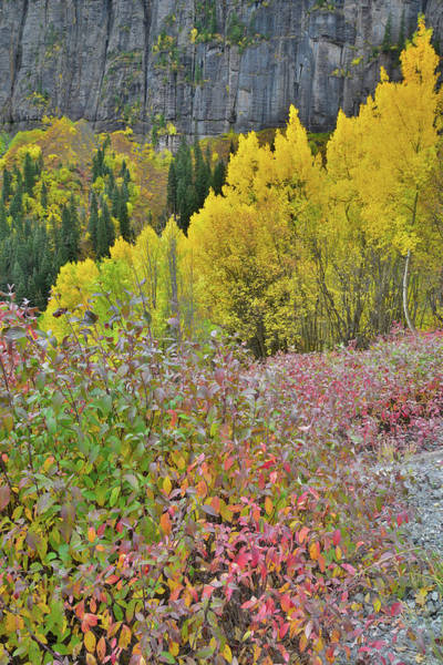 Photograph - Heading Up To Yankee Boy Basin by Ray Mathis