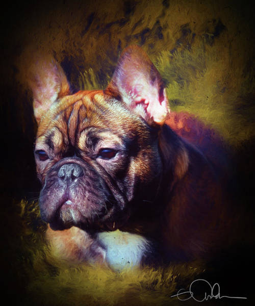 Digital Art - Headshot Of A French Bulldog by Gloria Anderson