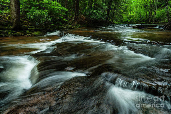 Headwaters Of Williams River  Art Print