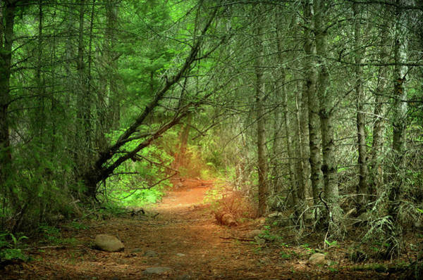 Photograph - Healing Light Of The Forest by Tara Turner
