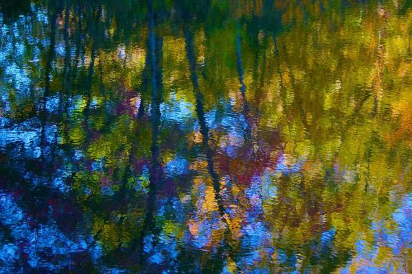 Photograph - Healing Reflection by Polly Castor