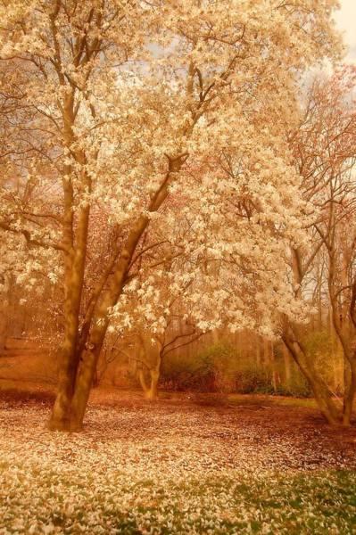 Photograph - Hear The Silence - Holmdel Park by Angie Tirado