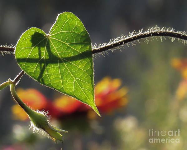 Heart Leaf 1 Art Print
