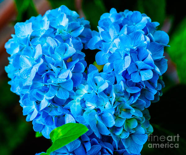 Heart Of Blue Art Print